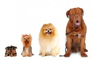 Perfect family companions...