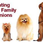 The Growing Pet Funeral Industry: Custom Pet Urns, Ceremonies, Memorials and More