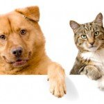 5 Things You Can Do to Cope with Pet Loss