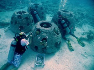 Coral-Transplanting